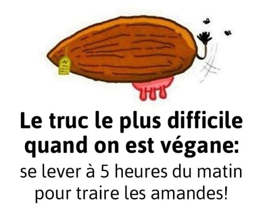 traire-les-amandes-5-heures-matin-humour-vegan-veggieromandie